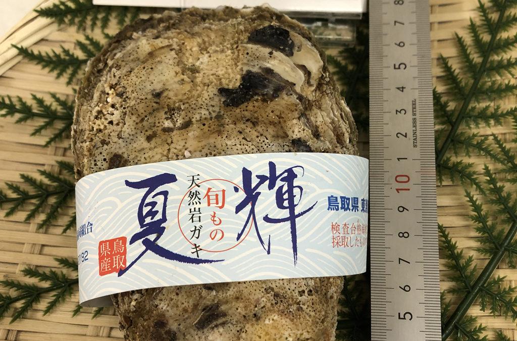 7月3日(金)鳥取港海鮮市場 かろいち:鮮魚セット、天然岩ガキなどを販売。2500円以上送料無料!