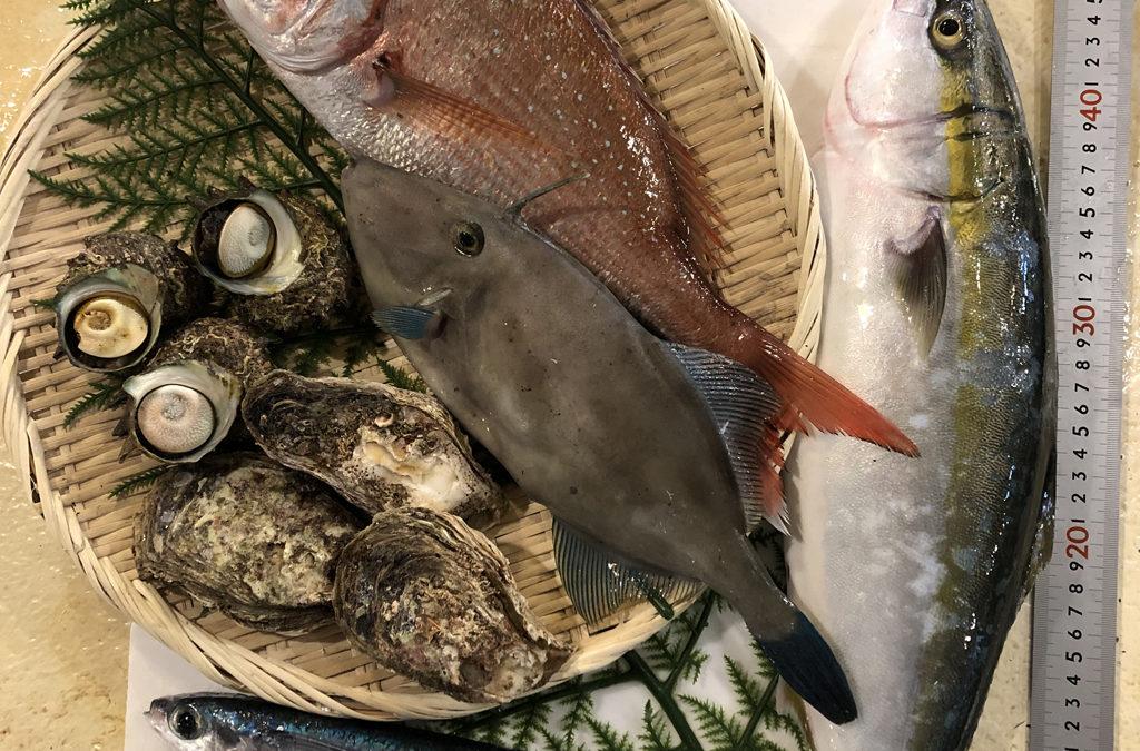 7月10日(金)鳥取港海鮮市場 かろいち:鮮魚セットやシロイカ&岩ガキセットなど!2500円以上で送料無料!