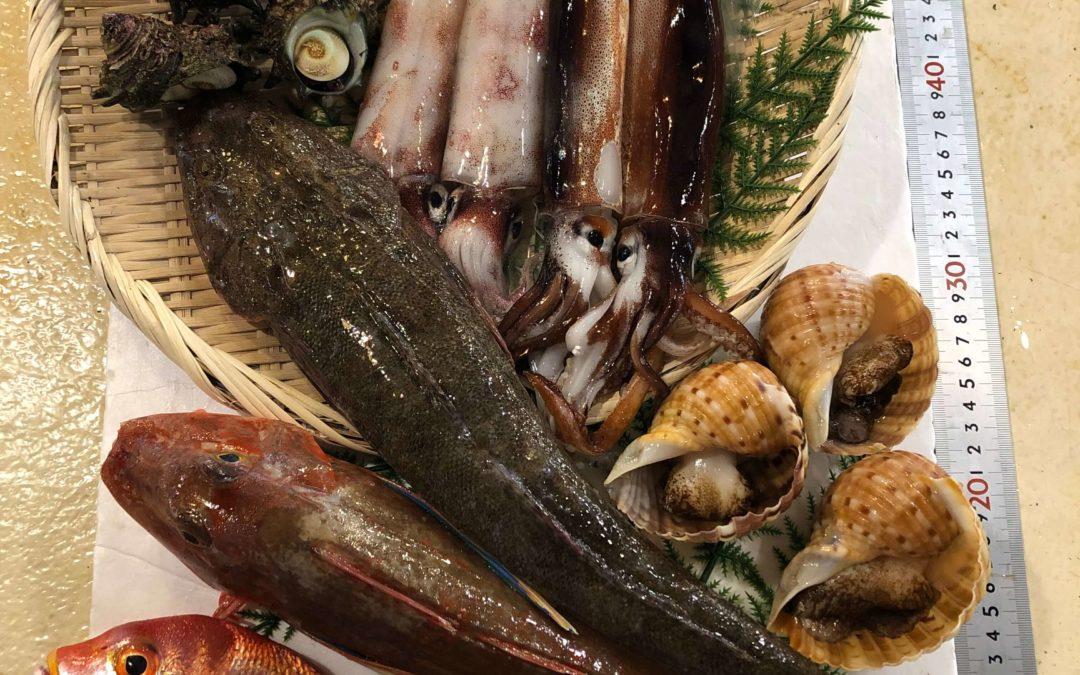 7月31日(金)鳥取港海鮮市場 かろいち:鮮魚セットご用意しました!2500円以上で送料無料。