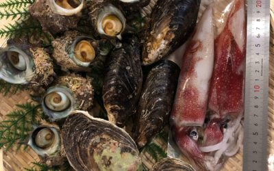 8月21日(金)鳥取港海鮮市場 かろいち:鮮魚セット、干物セットなど有!2500円以上で送料無料!